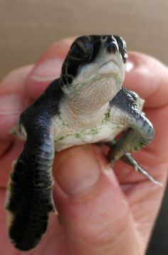 Emoticon Faces Acted Out by Turtles '^' You have to look at all of them - it will make you smile:-)