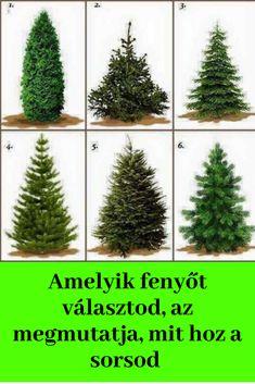 Cactus Plants, Christmas Tree, Holiday Decor, Random, Kunst, Pictures, Teal Christmas Tree, Cacti, Cactus