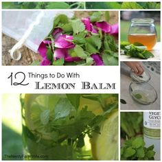 12 Amazing Things You Can Do With Lemon Balm