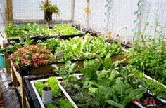 Aquaponics, perfect way to grow your own veggies and harvest your own fish. So sustainable!