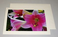 EASTER LILY Photo Greeting Card  Blank Card by KindredSpiritImages