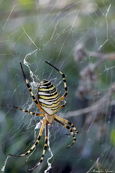 Types of Spiders – How are Spiders Classified and Grouped? URL: http://wolfspider.org/