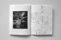 plantenboek_foto_0472dpi.jpg (600×399)