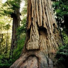 Ancient… #tree #face #nature