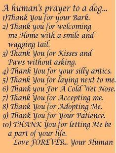 THANK YOU DOG.    ~ A Humans Prayer To a Dog ~
