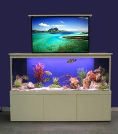 Are Wall Mounted Aquariums Cruel