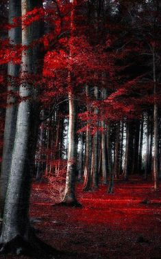 Dark Autumn forest in Germany digital photography: Dorothe Domke Digital Photography, Landscape Photography, Nature Photography, Germany Photography, Photography School, Photography Tips, Wedding Photography, Autumn Forest, Dark Forest