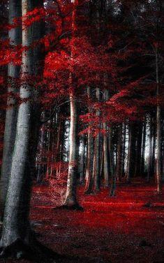 Dark Autumn forest in Germany digital photography: Dorothe Domke Digital Photography, Landscape Photography, Nature Photography, Germany Photography, Photography School, Photography Tips, Wedding Photography, Autumn Forest, Dark Forest