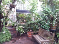 Un angolo dell'Orto Botanico di Amsterdam