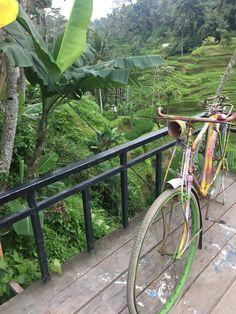 Bali, Ekim 2017// Pirinç  Teraslari 🤗