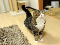 maru the cat+yoga=win