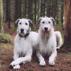 dogsbestman