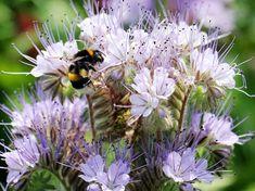 Herb Garden, Bee, Bloom, Herbs, Flowers, Plants, Industrial, Gardening, Business