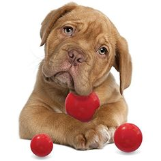 Dog Ball Toys for Your Aggressive Chewer Rugged Red Ball Set 3 Pack 3 Sizes Great for Large Medium and Small Pets TDGoodTimes/PawTime http://www.amazon.com/dp/B0198TTYC8/ref=cm_sw_r_pi_dp_YDbDwb0SA9MWS