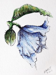 "Original artwork of a blue himalayan poppy rendered in pen, ink and watercolor. It is titled ""Blue Himalayan Watercolor Poppy"" and is signed and dated at the bottom with the title on the back. This lovely watercolor has an interesting composition with the poppy facing downward at"
