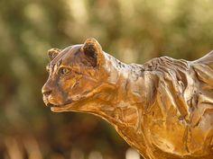 Bronze Edition 15 - cheetah running - sold out. Bronze Sculpture, Lion Sculpture, South African Artists, Cheetah, Wildlife, Creatures, The Incredibles, Statue, Running