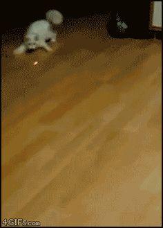 Quand mon chat m'aide à nettoyer le sol
