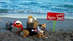 Wishing each of you who celebrate a very Merry Christmas! Very Merry Christmas, Family Christmas, Christmas Holidays, Photos With Dog, Boy Photos, Christmas Beach Photos, Critters 3, Boy Photo Shoot, Dog Beach