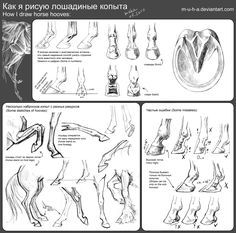 Tutorial - horse hooves by ~m-u-h-a on deviantART. Animal Anatomy Artist Reference.