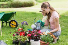 Einen pflegeleichten Garten anlegen