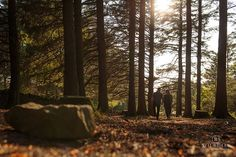 Stunning sunset shoot for this Pre Wedding Shoot at Beacon Fell Country Park :-) #NRP #neilridleyphotography #fearless #wedisson #bridebook #sunset #goldenhour #woodland #forest #preweddingshoot #engagementshoot #eshoot #couplesshoot #engaged #weddingplanning #shesaidyes #love