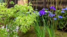 Explore the line-up of more than 30 exciting show gardens and features at the RHS Hampton Court Flower Show in 2018 Hampton Court Flower Show, Rhs Hampton Court, Flower Shower, The Hamptons, Herbs, Flowers, Herb, Royal Icing Flowers, Floral