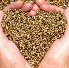 Hemp Seeds are a potent superfood that can provide a natural remedy to digestive issues while decreasing risks of heart disease! Hemp is a true superfood. Superfoods, Hemp Seed Recipes, Cannabis Plant, Hemp Hearts, Protein Sources, Hemp Seeds, Side Dishes, Health Tips, Recipes