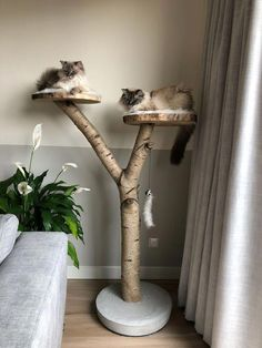 Scratching post for two cats sleeping lying down – kratzbaum Porta Diy, Diy Cat Tree, Cat Room, Pet Furniture, Office Furniture, Cat Sleeping, Handmade Home, Crazy Cats, Diy And Crafts