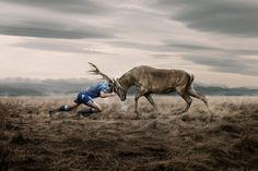 Article: An Art of Animal Advertising; Art of Ross Brown ... #pets #animals ... PetsLady.com