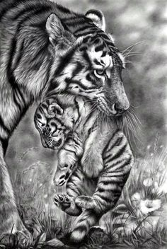 Realistic Animal Pencil Drawings (31)