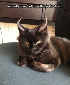 I'm pretty sure that my kitten is the devil... #cat #cat #funny