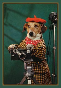 Fridge Magnet vintage 1950's Dog in Red Beret as a photographer kitchy cornball goofy