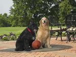Domino and Dover:  Dribbling is allowed!