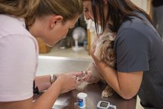 At Palmetto Animal Hospital, our technicians are highly trained in a wide range of veterinary services. These technicians are drawing blood for a blood glucose test. The monitor requires just one drop of blood to report a pet's blood glucose level.