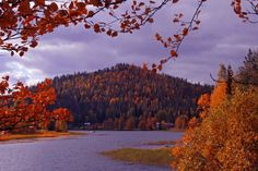 Ruskan loistoa. Autumn colours.