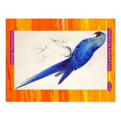 Edward Lear. Hyacinthine Macaw. Postcard - postcard post card postcards unique diy cyo customize personalize