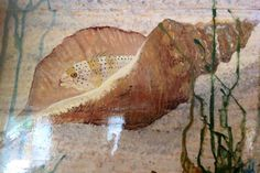 """Conch Shell with hiding fish painting 15"""" with distressed frame original on reclaimed wood home decor wall art by wildlife artist Todd Lynd by oceanarts10 on Etsy"""