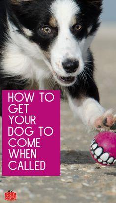 *SMALL* Waterproof Dog Coat Fleece Lined handmade length 35cm by Maisie-Moo