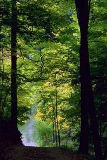 Appalachian National Scenic Trail - Learn about the Appalachian National Scenic Trail