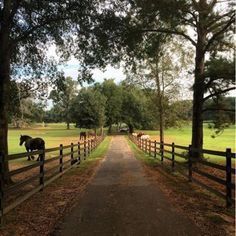 Strategy, methods, including resource with regards to obtaining the finest end result and also ensuring the optimum use of Landscaping Front Yard Flowers Porta Colonial, Country Life, Country Roads, Beautiful Homes, Beautiful Places, Texas Farm, Future Farms, Dream Barn, Farms Living
