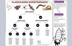 CLASIFICANDO INVERTEBRADOS. INCLUYE AUTOEVALUACIÓN Y COEVALUACIÓN.