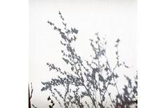 Olga Chagaoutdinova |In the Time of Sakura no.8 | Photographie impression jet d'encre (inkjet photography) |2011