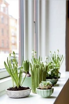 Green & Home Design Article