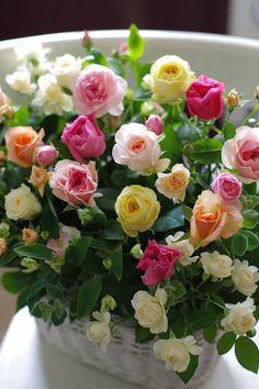 Ideas Flowers Boquette Red Floral Arrangements For 2019 Beautiful Rose Flowers, Beautiful Flower Arrangements, Love Rose, Amazing Flowers, Floral Arrangements, Beautiful Flowers, Romantic Roses, Flower Wallpaper, Summer Flowers