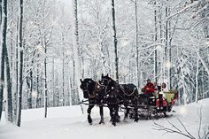Winter may be the least popular wedding season, but these incredible photos may change your mind. From gorgeous snow-covered photos to incredible transportation ideas to the chicest fashion options, there's nothing quite like a winter wedding. Horse Wedding, Dashing Through The Snow, Winter Wonderland Wedding, Santa Sleigh, Forest Animals, Wedding Sets, Christmas Wedding, Scenery, Wedding Photography