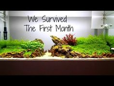 Aquascaping THE ISLANDS - One Month Update - YouTube