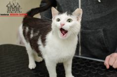 Kesha is looking for ... #cute #cutecats #cats #caturday #kot #koty #neko #gato #katz #katzen #kittens #chat