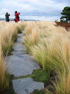 grasses,+limestone+cut+outs+on+the+floor+yard+graden+townhouscity+courtyard.jpg 480×640 pixels