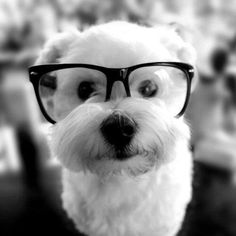 Hipster doggie