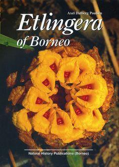 Etlingera of Borneo by Axel Dalberg Poulsen